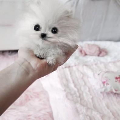 small-dog24