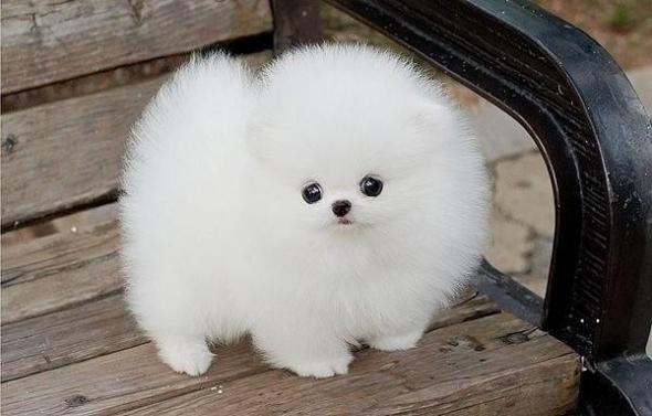 small-dog25