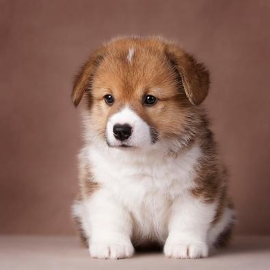 small-dog4