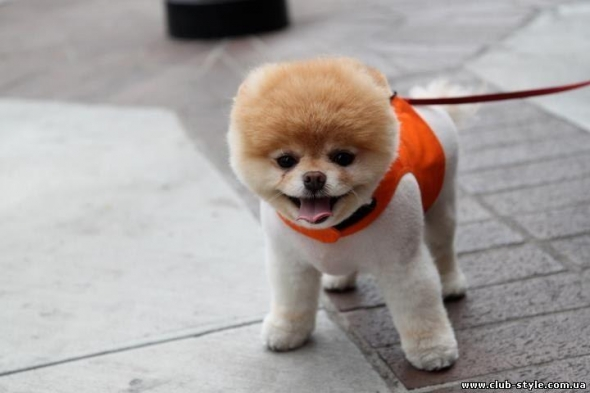 small-dog5