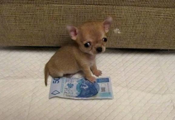 small-dog6