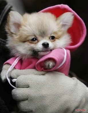 small-dog8