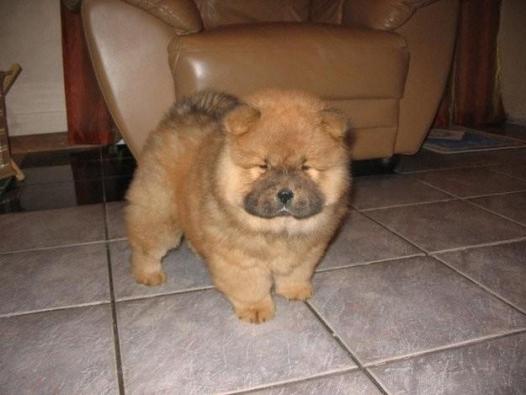 small-dog9