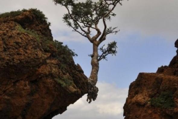 фото дерева на обрыве