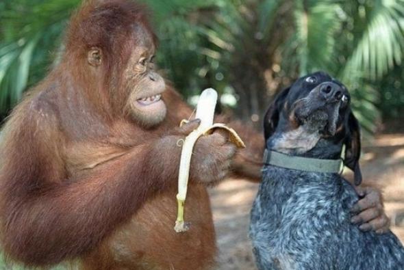 съешь бананчик