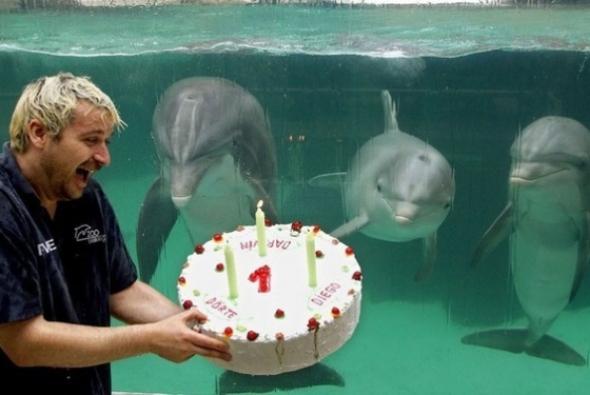 праздник дельфинов
