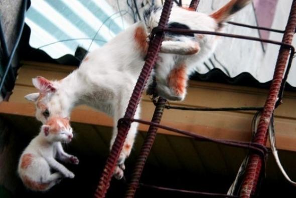 кошка переносит котенка