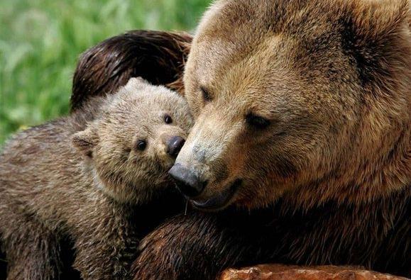 roditelskaya-lubov-bear