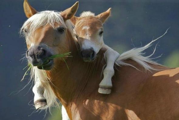 roditelskaya-lubov-koni