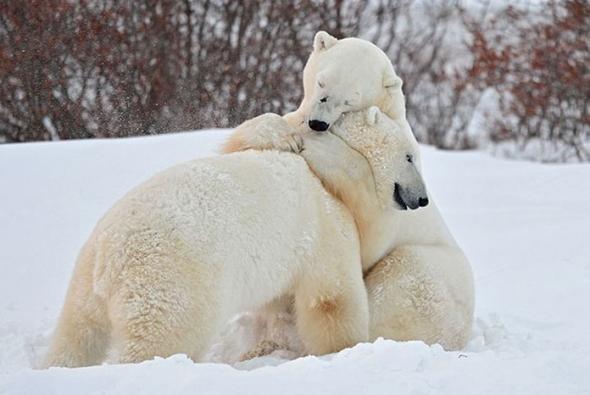 roditelskaya-lubov-medv