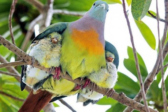 roditelskaya-lubov-ptitci