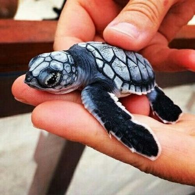 small-turtle4