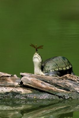 small-turtle6