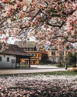 strasburg-foto-13