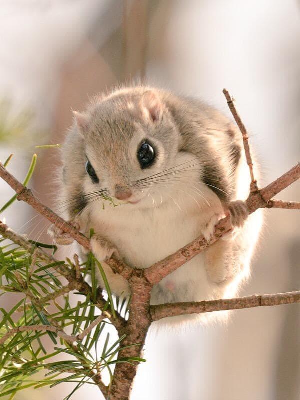 самое милое животное на земле фото фаттахова