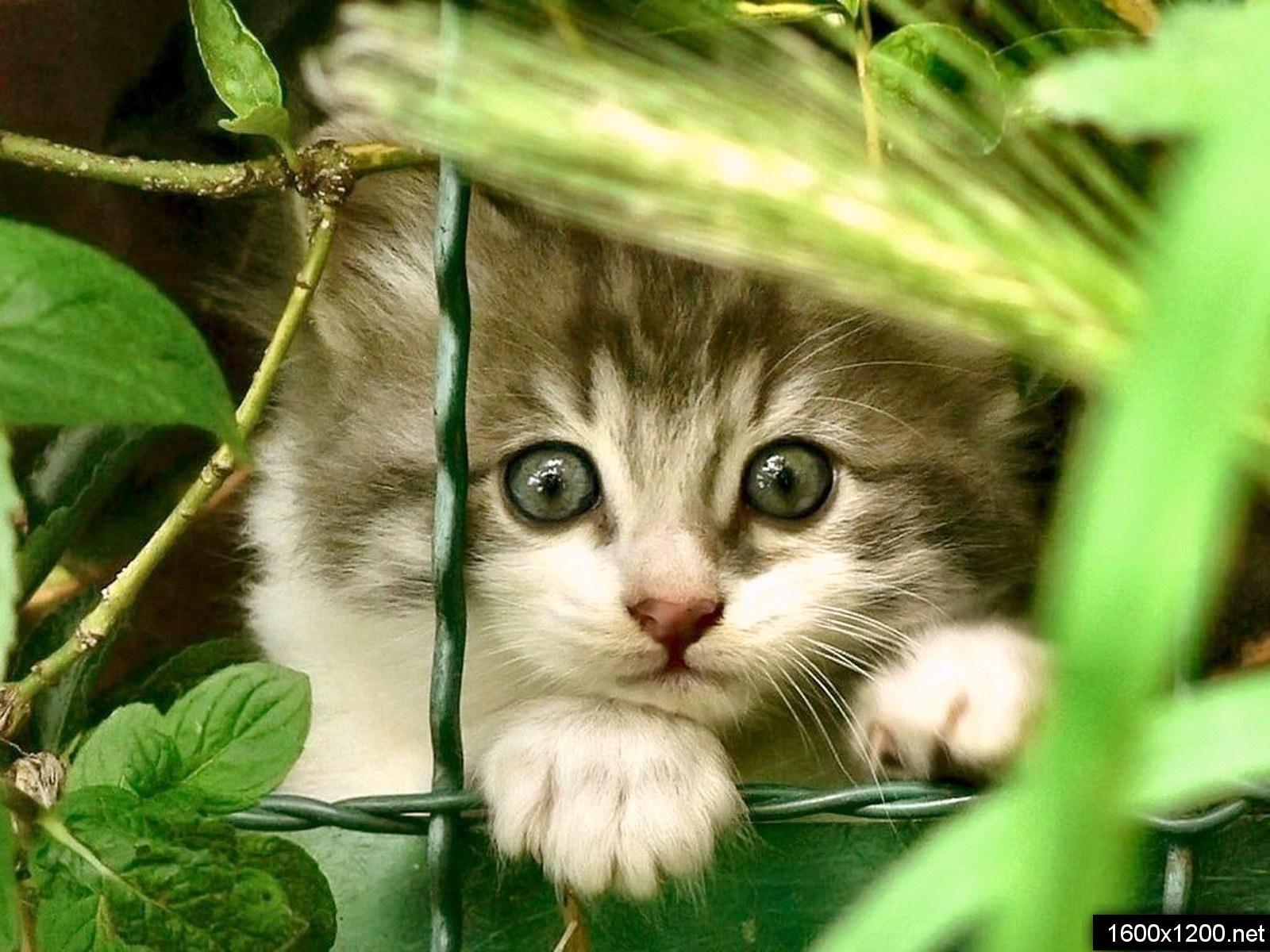 Маленькие котята ( 23 фото )