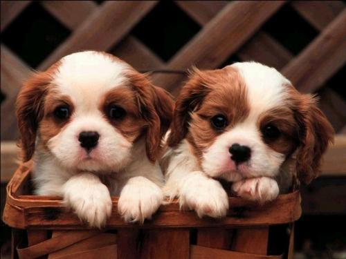 Фото смешных щенков ( 25 фото )
