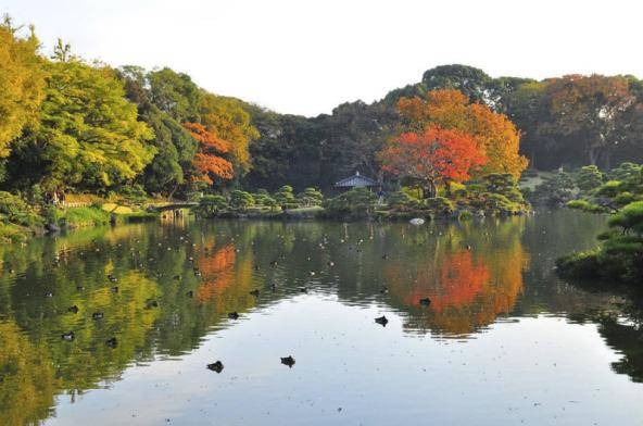 Сад Киесуми