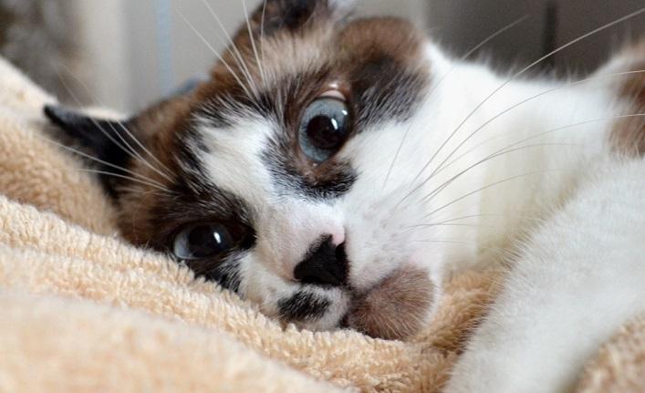 Беременные кошки (24 фото)