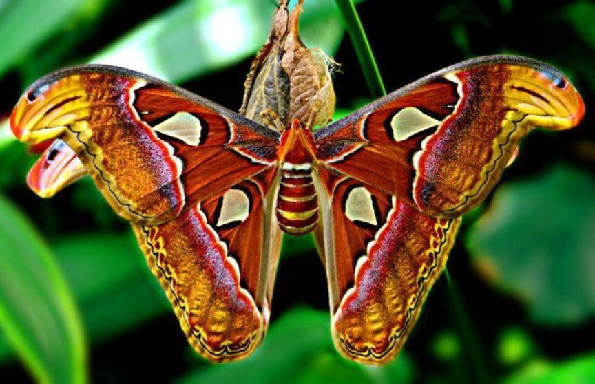 Тропические бабочки (24 фото)