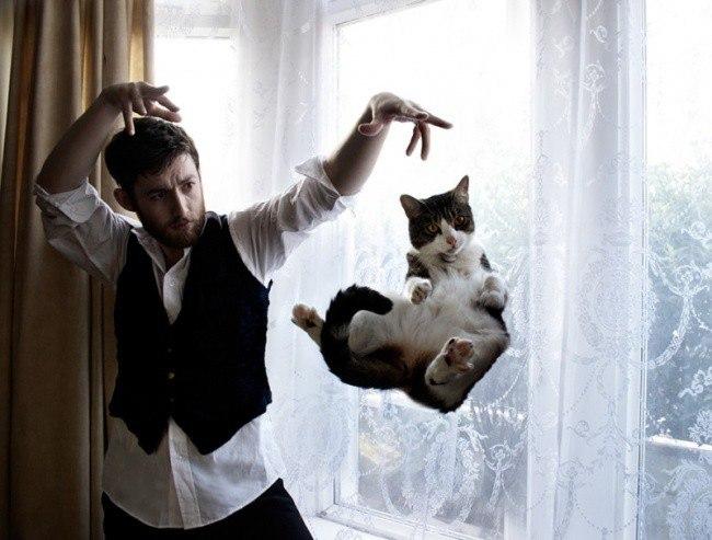 Необычное поведение котов (11 фото)