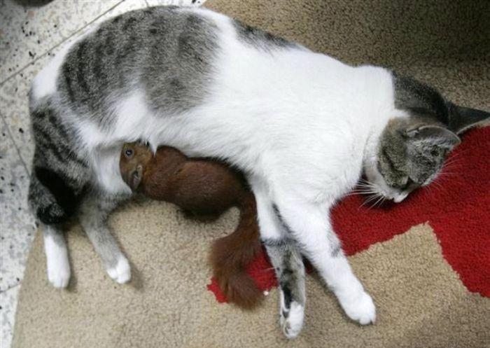 Необычная семья (7 фото)