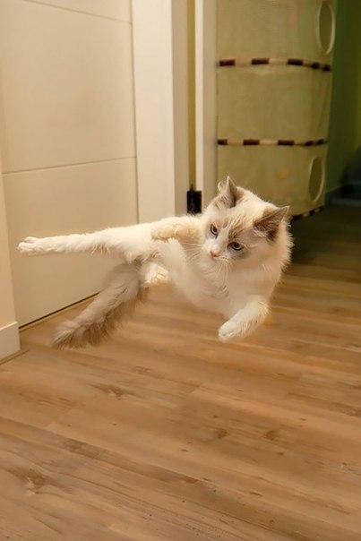 Коты-ниндзя (17 фото)