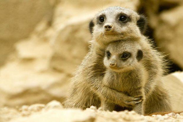 Родительская любовь у животных (31 фото)