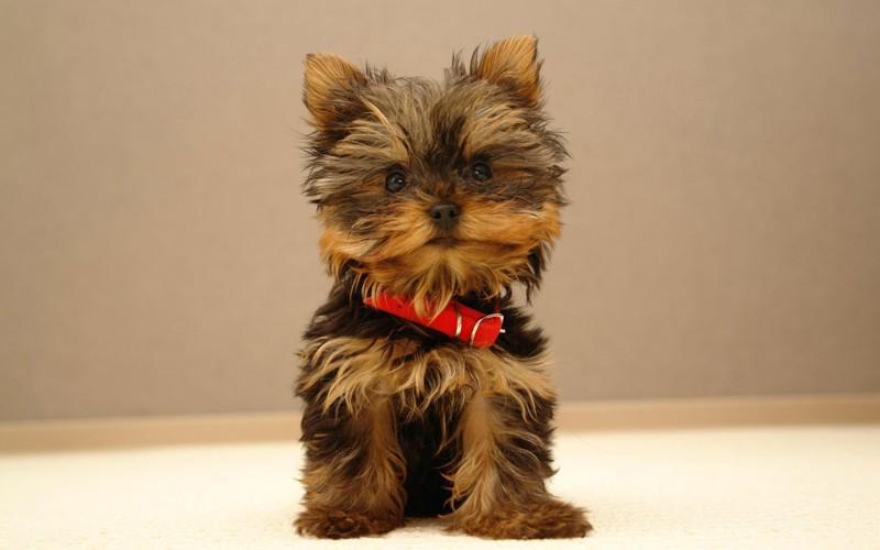 Маленькие собачки (25 фото)
